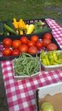 Kürbis und Tomaten und grüne Bohnen oh, die meine sind! Stockfotografie