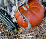 Kürbis und Zucchini Stockfotografie