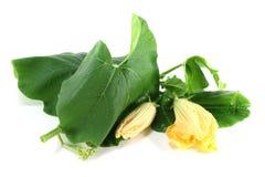 Kürbisblüte mit Blättern Stockbild