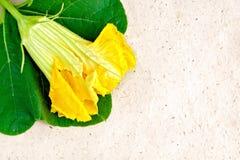 Kürbisblume auf Packpapier Lizenzfreie Stockbilder