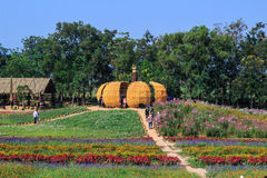 Kürbisblumengarten an fram Jims Thompson Lizenzfreie Stockfotos