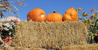Kürbise auf Ballen von Straw Hay stockfoto