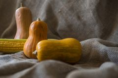 Kürbise auf einer Leinwand Des Herbstes Leben noch Stockfotografie