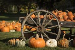 Kürbise bei Halloween Stockbild