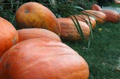 Kürbise bereiteten sich für Halloween vor Stockfotografie