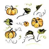 Kürbise, Blätter und Reben auf weißem Hintergrund Handgemalte Aquarellillustration Stockbild