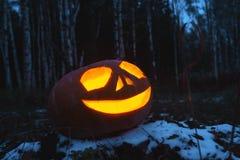 Kürbise für Halloween stockbild