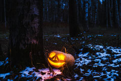 Kürbise für Halloween lizenzfreie stockbilder