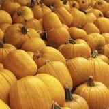 Kürbise - Halloween stockbild