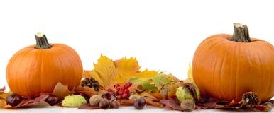 Kürbise mit Herbstlaub für Danksagungstag auf weißem Hintergrund
