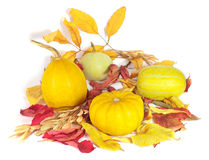 Kürbise mit trockenen Blättern für Halloween-Dekoration Stockfotografie