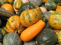 Kürbise und Zucchini Stockbilder