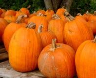 Kürbisflecken im Herbst Stockfoto