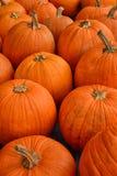Kürbisflecken im Herbst Lizenzfreies Stockfoto