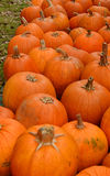 Kürbisflecken im Herbst Stockbild