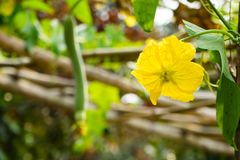 Kürbisflecken mit Blumen im Wald stockfotos