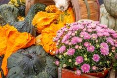 Kürbisse und Blume Lizenzfreies Stockbild