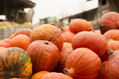 Kürbisstand auf dem Markt eines Landwirts Lizenzfreie Stockfotografie