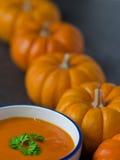 Kürbissuppe und Reihe von pumkins Stockbild