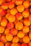 Kürzlich geerntet reifen Sie Aprikosen in Europa Lizenzfreie Stockfotos