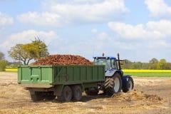 Kürzlich geerntete Karotten Stockbild