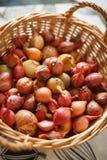 Kürzlich geerntete rote Zwiebeln in einem gesponnenen Korb mit Sonnenlicht Stockbild