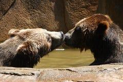 Küssen von Bären Stockbilder