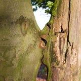Küssen von Bäumen Lizenzfreies Stockfoto