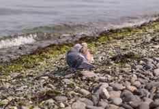 Küssen von zwei blau und von roten Tauben auf dem seacost Stockfotos