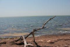 Küste des Meeres, ein großer Baumstumpf, ein heißer Tag des Sommers Lizenzfreies Stockfoto