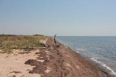 Küste des Meeres, ein großer Baumstumpf, ein heißer Tag des Sommers Stockfoto
