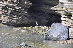 Küste des Point Loma Stockbilder