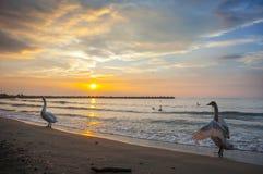 Küste Schwarzen Meers, Varna, Bulgarien Lizenzfreies Stockbild