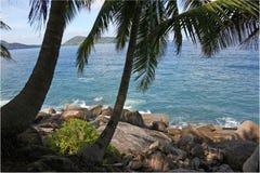 Küste und Palme Stockbild