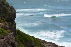 Küste von Barbuda Lizenzfreie Stockfotografie