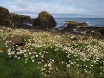 Küste von Irland Lizenzfreie Stockfotografie