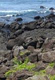 Küste von Jeju-Insel Korea Lizenzfreie Stockfotos