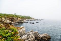 Küste von Maine im Nebel Stockfotografie