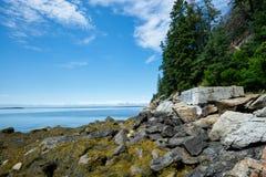 Küste von Maine mit Algen Lizenzfreie Stockbilder