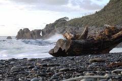 Küste von Neuseeland stockbild