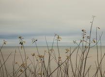 Küste, Winter 2017 - blaue Himmel und gelbliches Wasser Lizenzfreie Stockfotografie