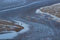 Küstefeuchtgebietsseevögel Lizenzfreie Stockfotografie