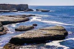 Küsten-Hafendichtungen des Pazifischen Ozeans, die auf Felsen, Wilder Ranch State Park, nahe Santa Cruz, Kalifornien stillstehen lizenzfreies stockbild