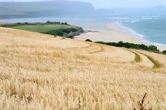 Küstenansicht, die ein Weizenfeld enthält Stockfotografie