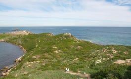 Küstendünen mit Verschachtelungs-Möven Stockfotos