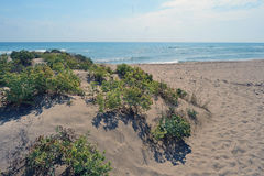 Küstendünen am Mund von Llobregat Lizenzfreie Stockfotos