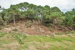 Küstenerosion entlang der Küste für einige Bäume entlang den Hügeln in der englischen Landschaft Stockbild