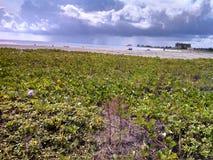 Küstenfarben Lizenzfreie Stockfotografie