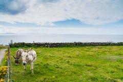 Küstengrafschaft Kerry entlang wilde atlantische Weise szenischem touristischem driv Lizenzfreie Stockfotos