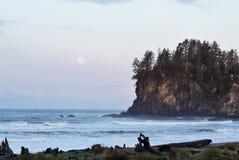 Küstenklippenwald mit Mond lizenzfreie stockbilder